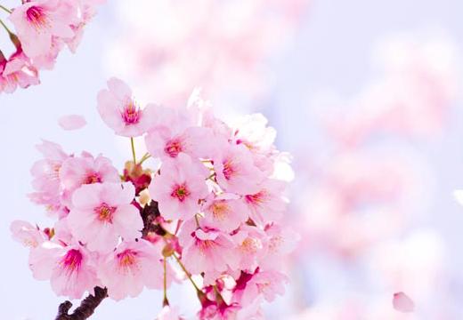 春 引越しのピーク時期 引越し料金を安くする方法