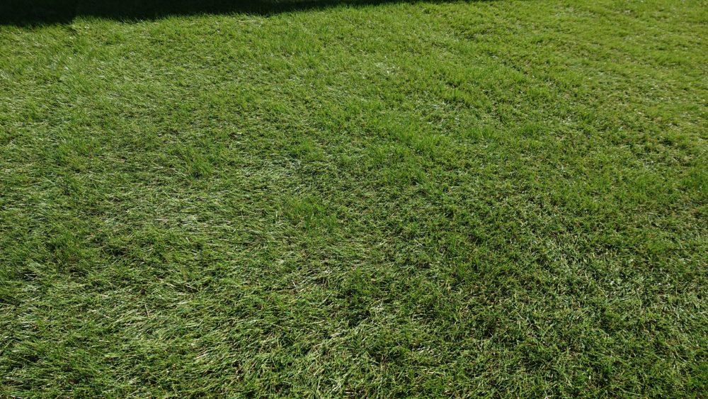 毛足の向きを揃える|人工芝を敷く